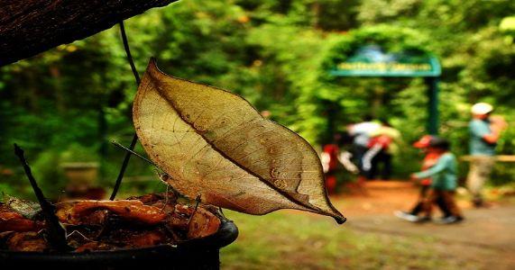 जाऊ फुलपाखरांच्या गावा