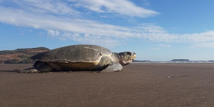 sea turtle_1H