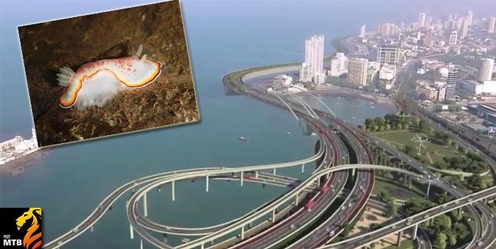 mumbai coastal road _1&nb