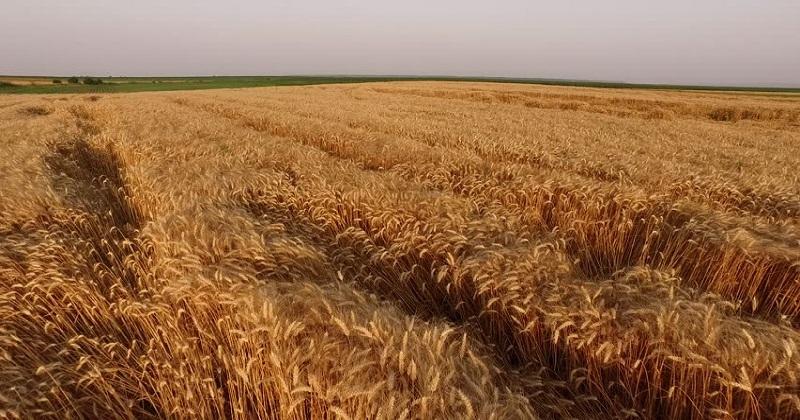 grass land_1H