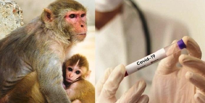 monkey _1H x