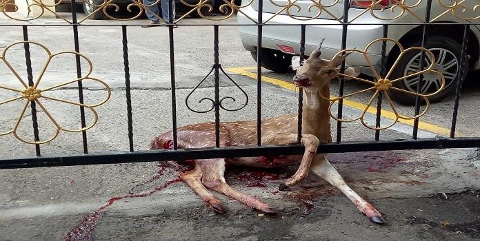 deer_1H x W: