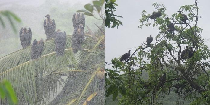 vultures _1H
