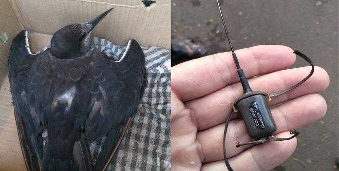 bird_1H x W: