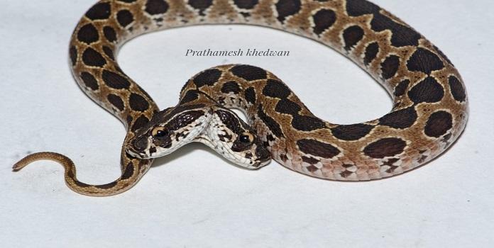 snake_1H x W: