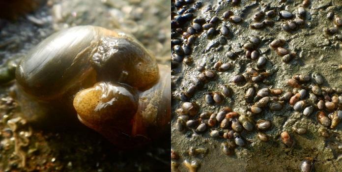 sea slug _1H