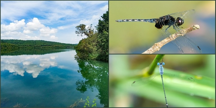 dragonfly _1H