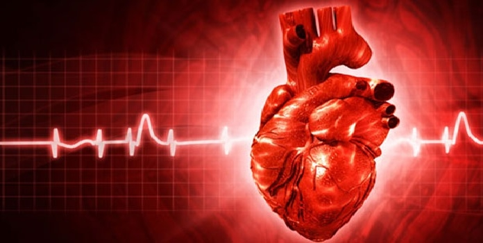 Heart_1H x W: