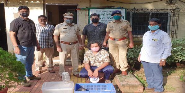 मुंबईत सर्पमित्रानेच केली वन्यजीवांची चोरी; सर्पमित्रास अटक