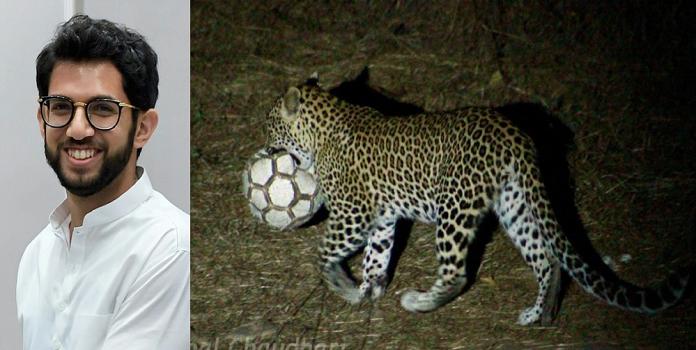leopard _1H x