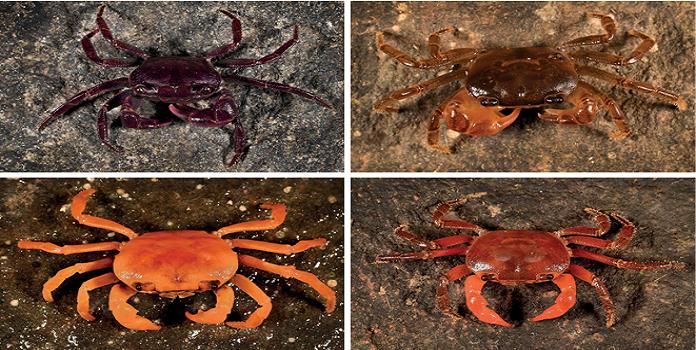 crab _1H x W: