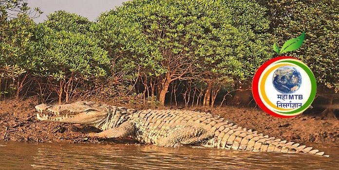 crocodile village _1